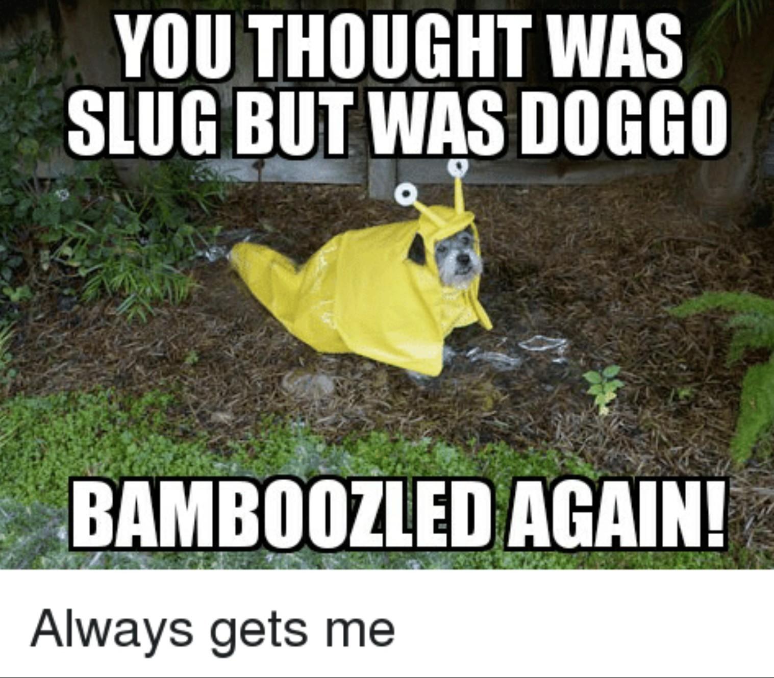 Sluggo or doggo? D'sloggo. - meme