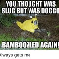 Sluggo or doggo? D'sloggo.