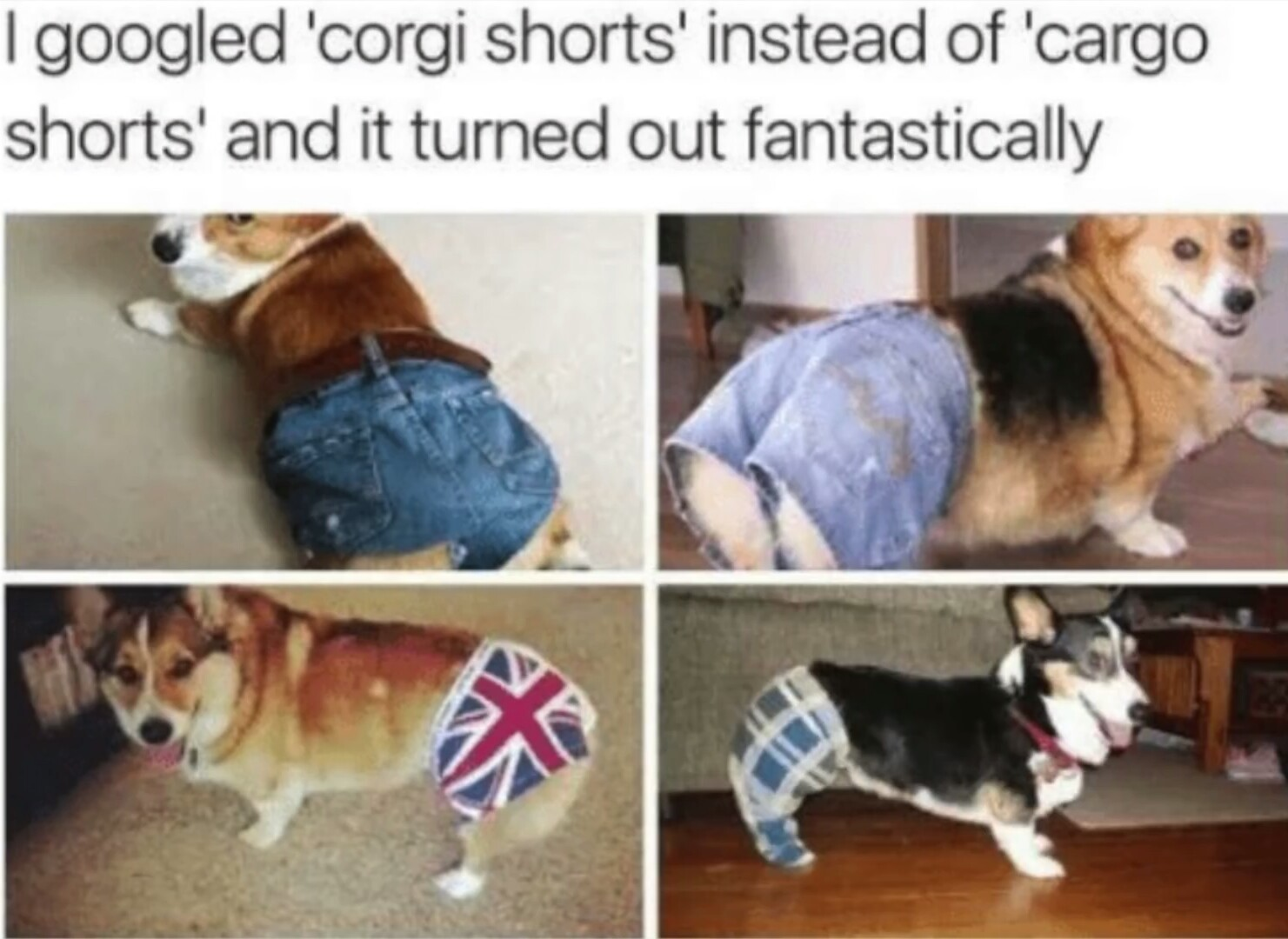 Corgo shorts - meme
