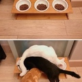 Quand tu veux pas changer de place pour manger mais que l'humain bouge les gamelles !