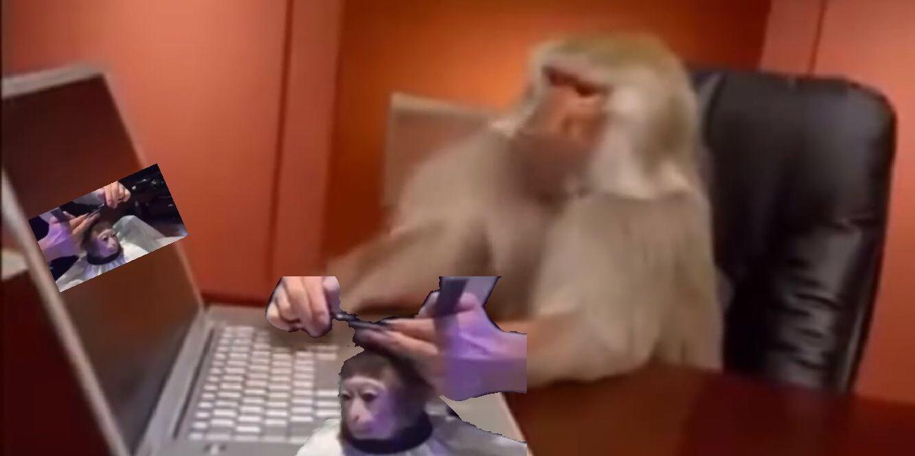 macaco penteando macaco enquanto ve outro macaco sendo penteado, mas na vdd esse macaco esta cortando o cabelo do outro macaco enquanto ve outro macaco cortando cabelo - meme