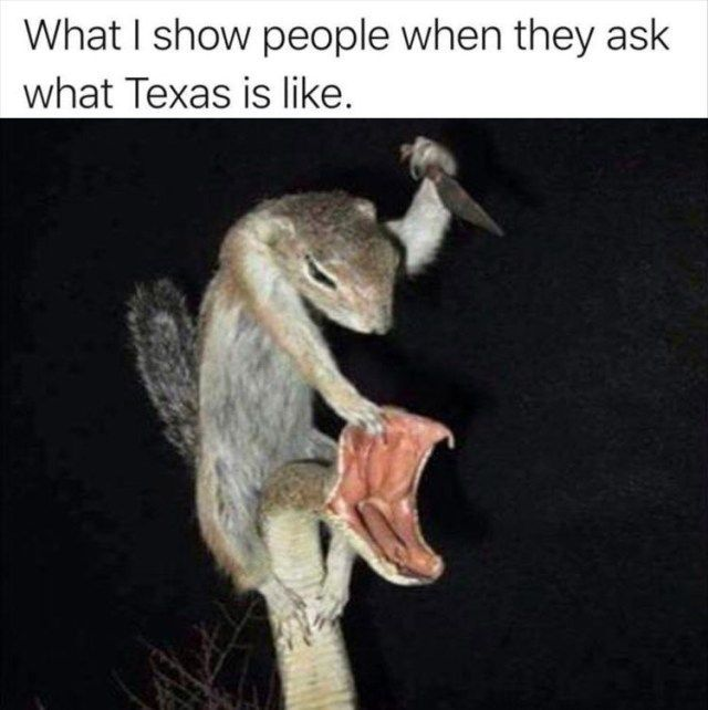 SEWER RAT ATTACK - meme