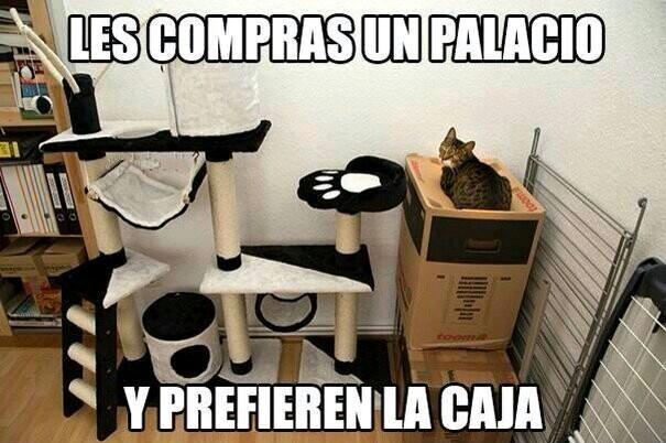 Pinchiss gatos - meme