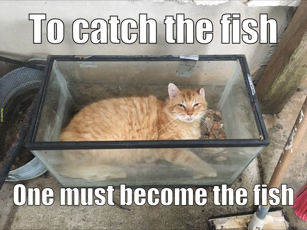 furry fishy - meme