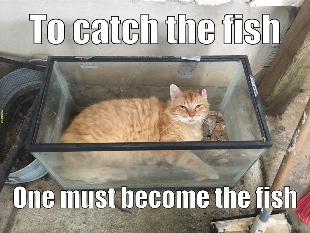 furry fishy - meme