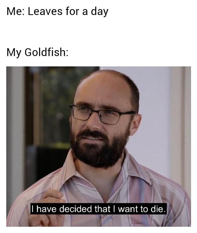 Oopsy - meme