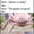The food ready