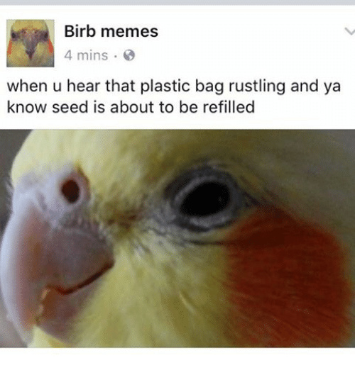 Birb is excite - meme