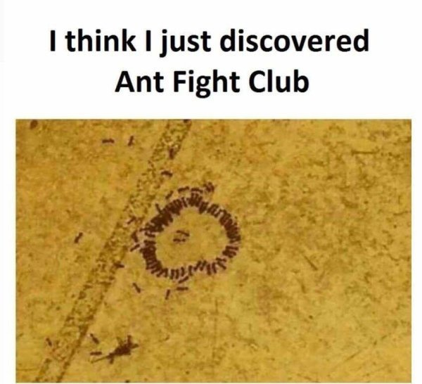 Ant fight club - meme