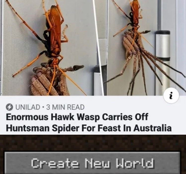 Australia, are you guys okay? - meme