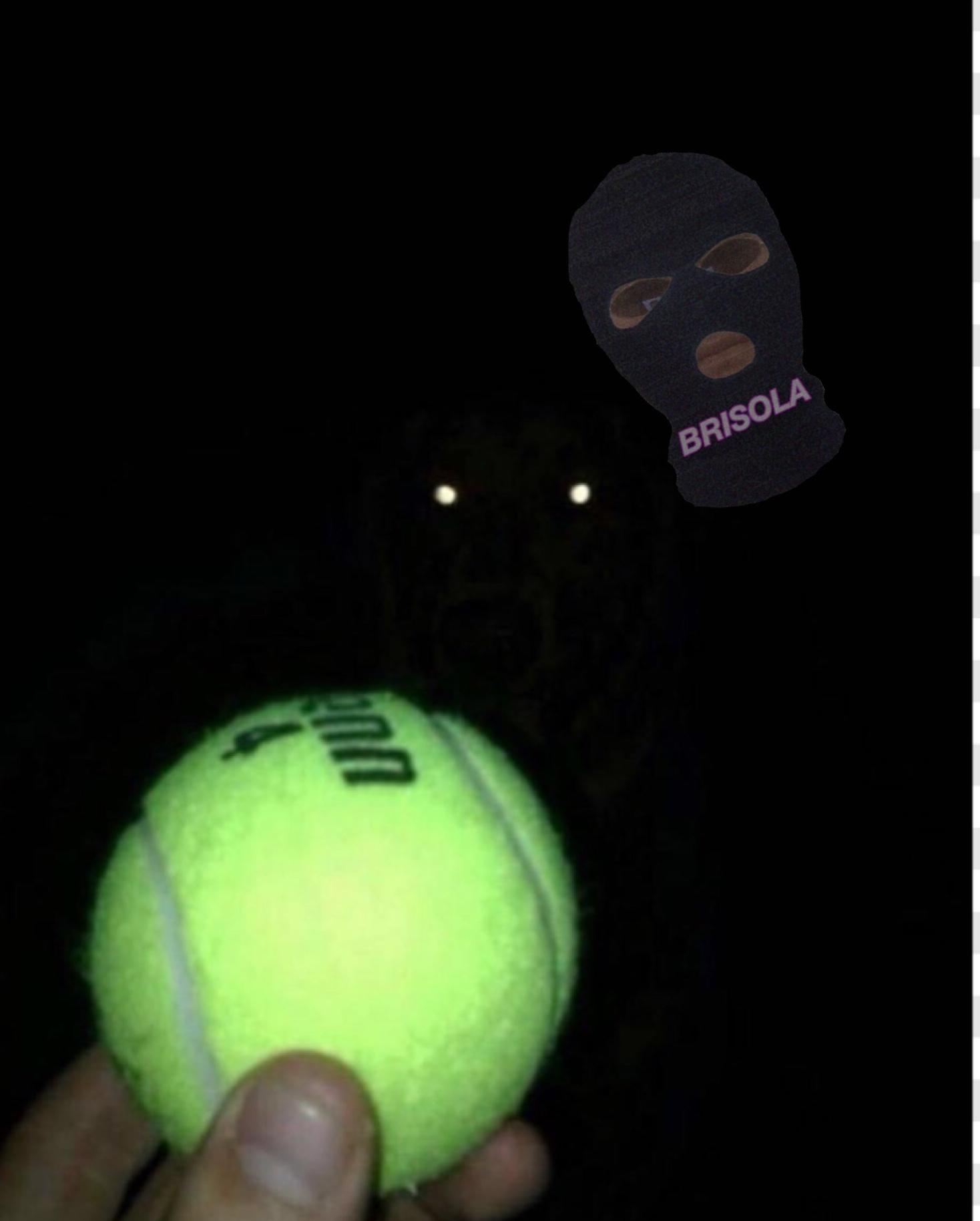 vem ca pega a bola vem - meme