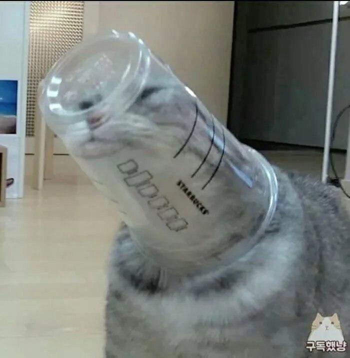 CAT!!!!! - meme
