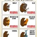Bears vs everything