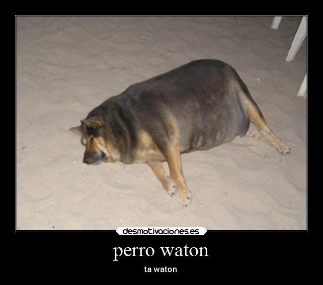 Perro waton - meme