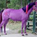cavalo colorido