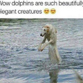Majestic Dolphins