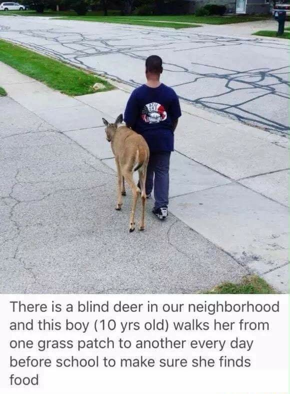 That animal has no eye deer whats going on. - meme