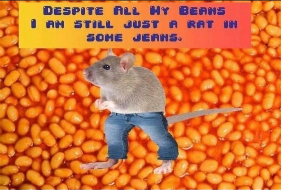 Rat in Jeans - meme