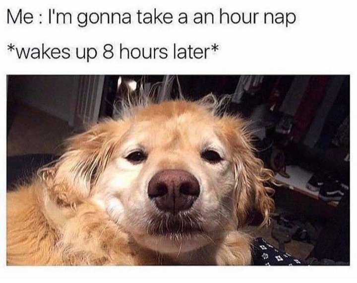 Nap - meme