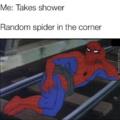 Random spider in corner