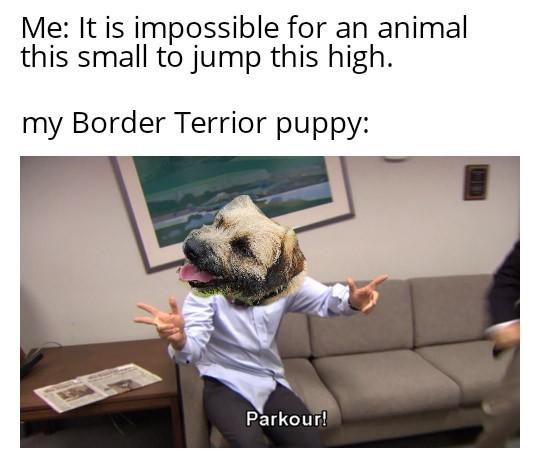 Crazy pupper - meme