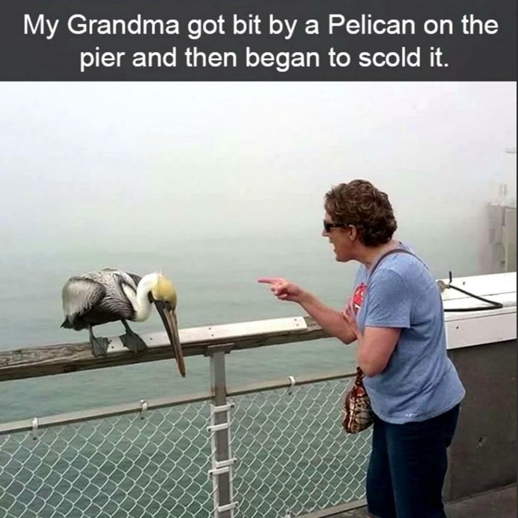 Lecturing a bird - meme