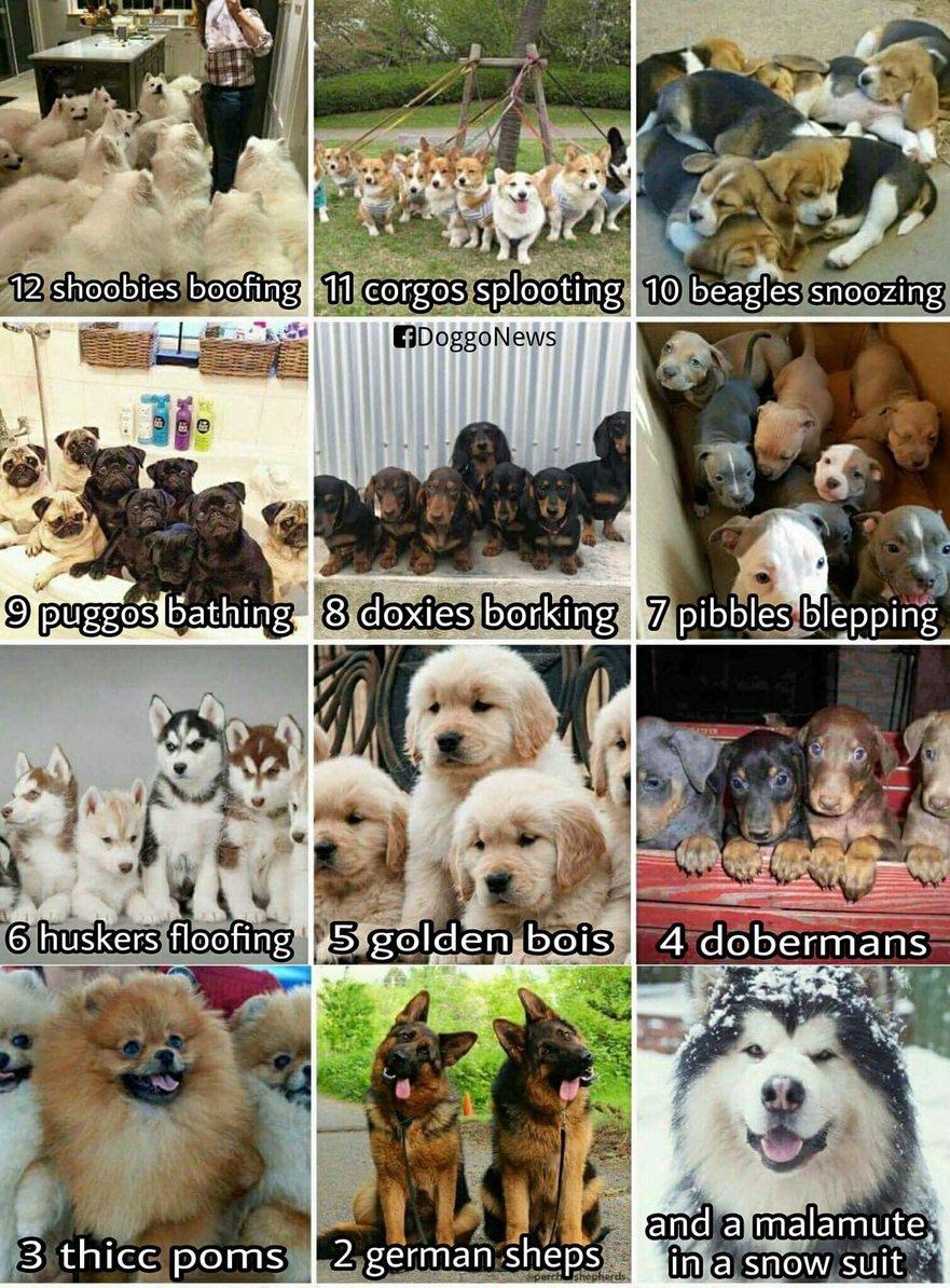 12 Doggos of Christmas - meme