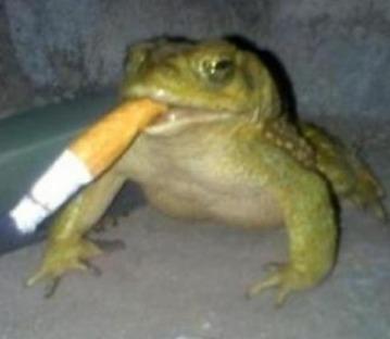 haha anfibio fumando - meme