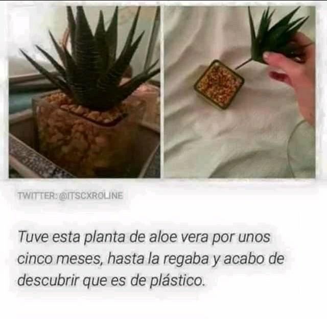 Plantita - meme