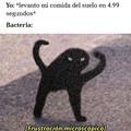 Reflejos felinos