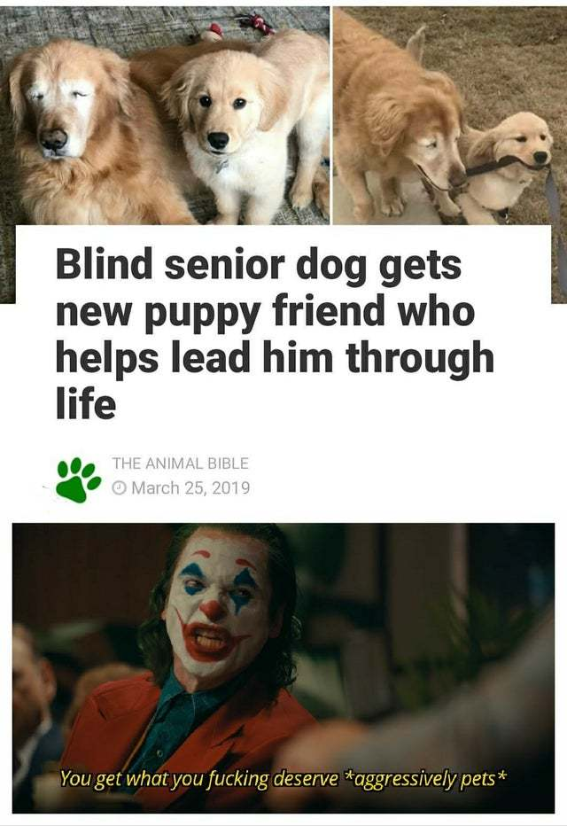 Blind senior dog gets new puppy friend who helps lead him through life - meme