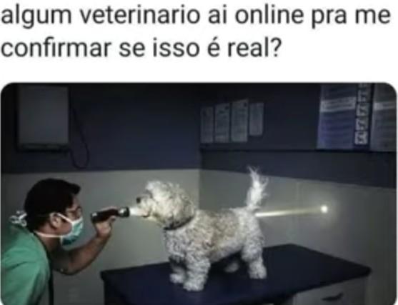 Cachorro ocado - meme