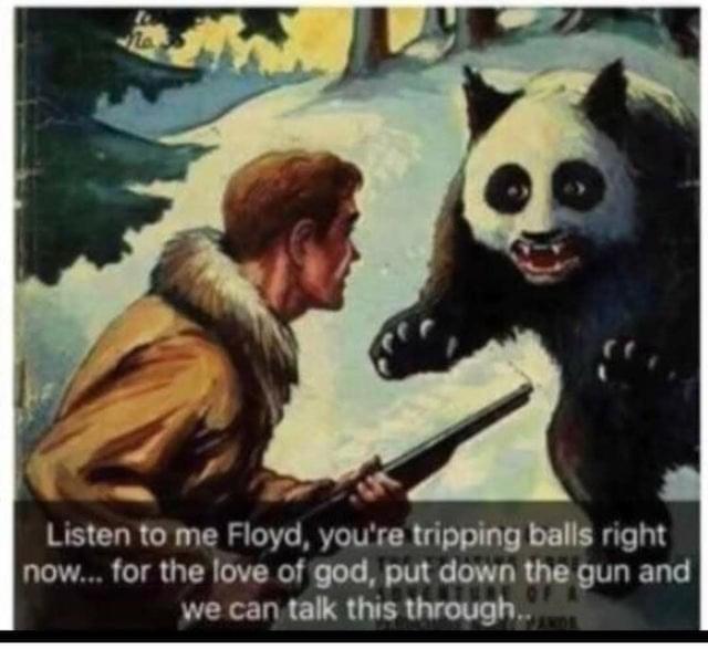 I've got no words for you bear - meme