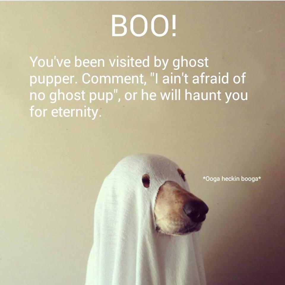 I ain't afraid of no ghost pup - meme