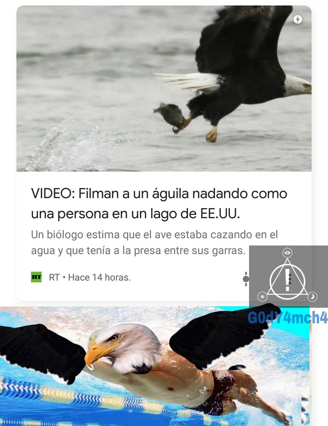 Águila poderosa xd - meme
