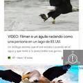 Águila poderosa xd