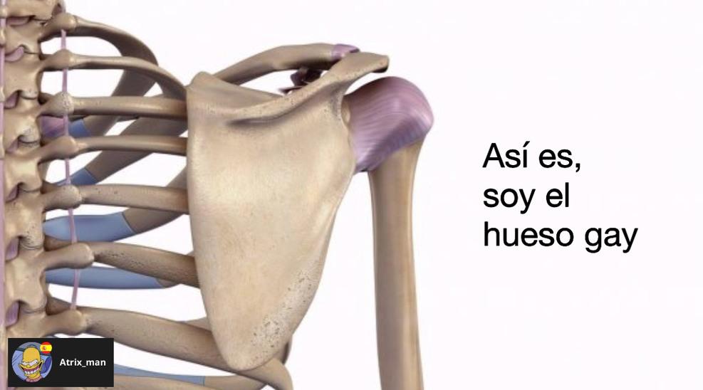 Homoplato - meme