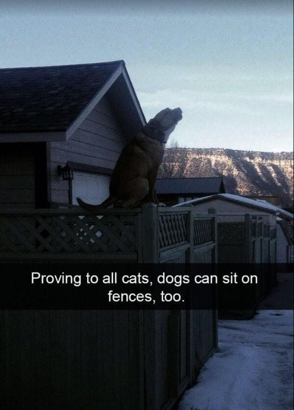 doggos > cats - meme