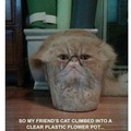 I want to be catnip mumma lol
