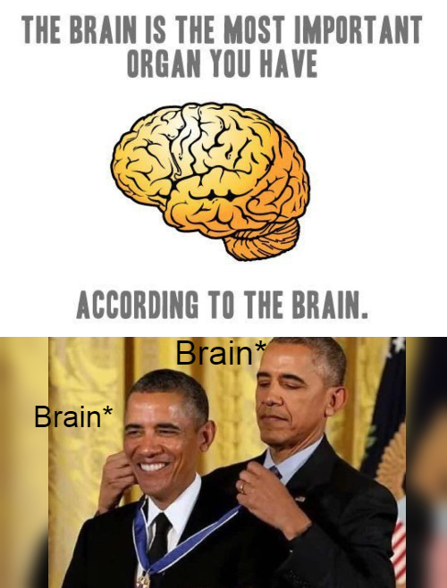 The brain is the most important organ you have, according to the brain - meme