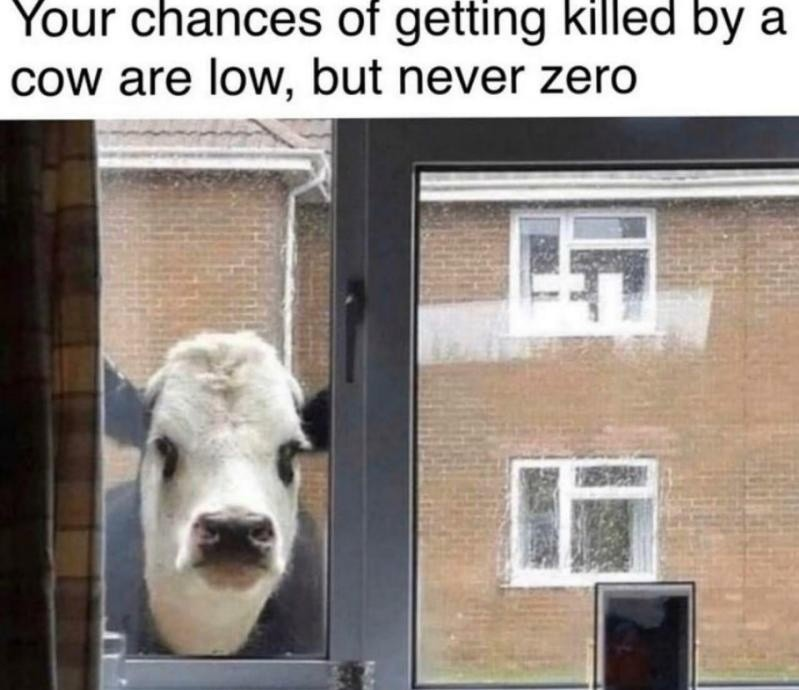 Watch out for those cows - meme