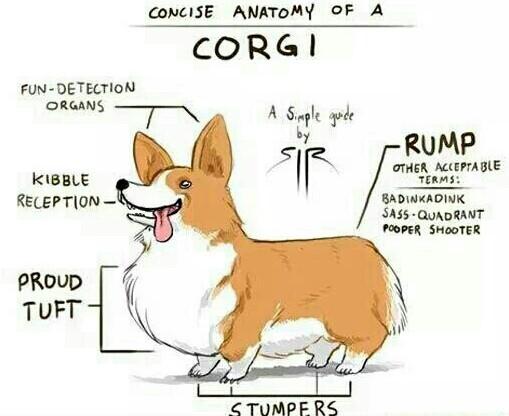 Popular doggo - meme
