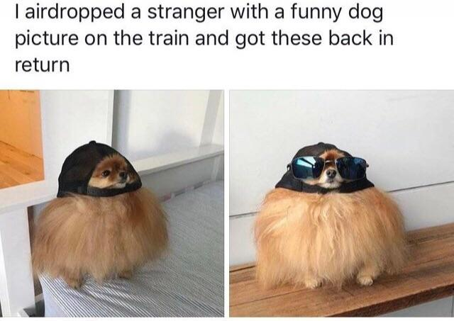 I airdropped a stranger with a funny dog picture on the train and got these back in return - meme