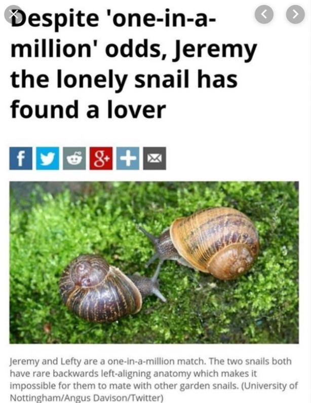Snail - meme