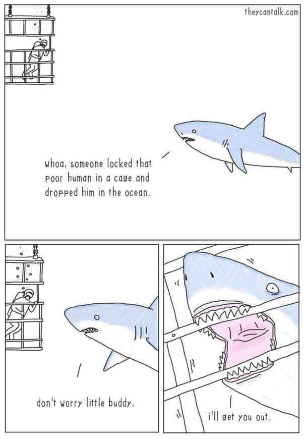 Sharks arent mean - meme