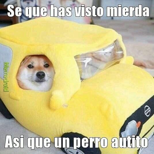 Perro auto - meme