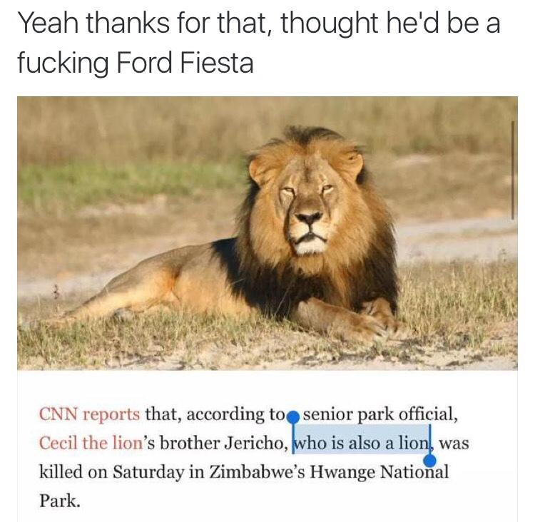 Lions - meme