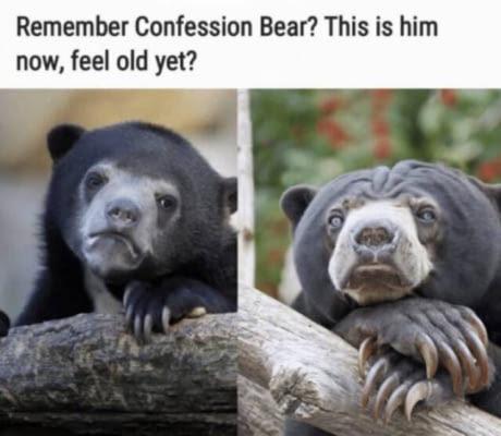 Confession Bear - meme