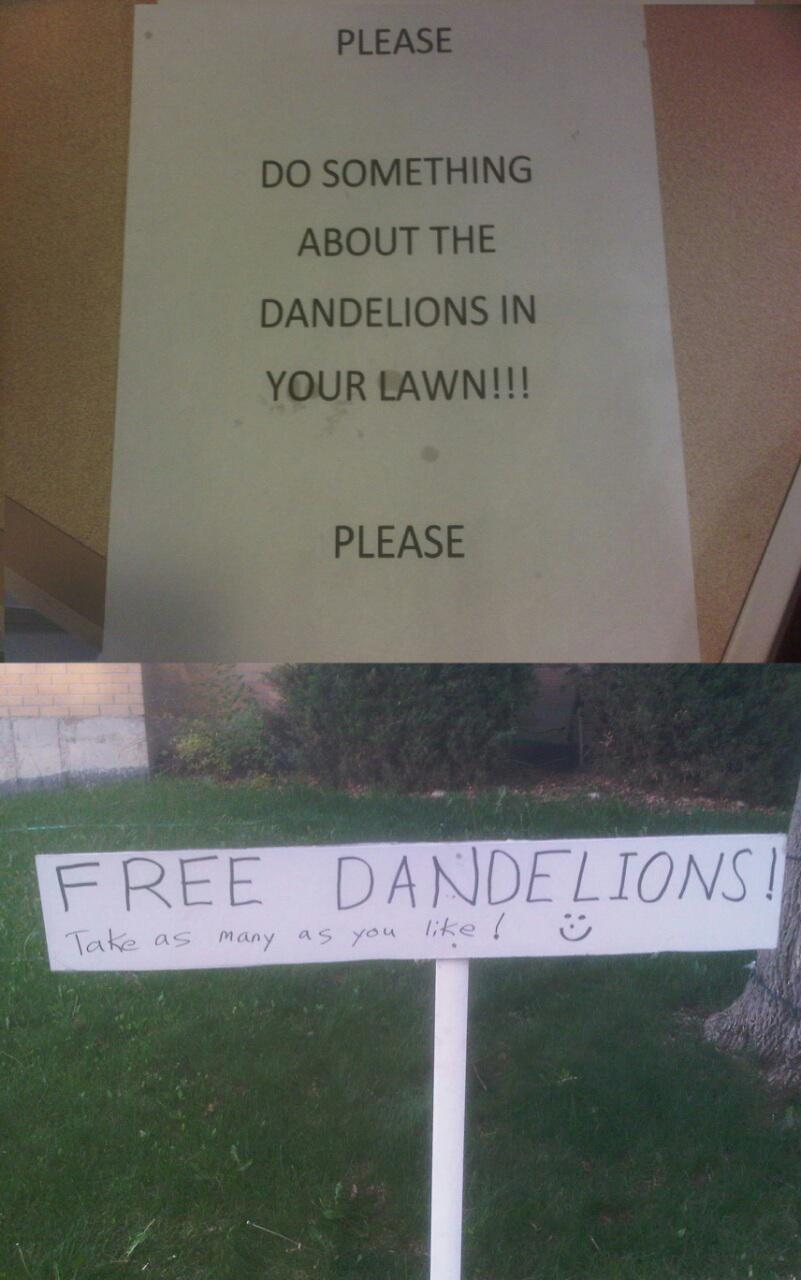 One at a time folks. Plenty of Dandelions for everyone - meme
