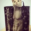 Meow bitch